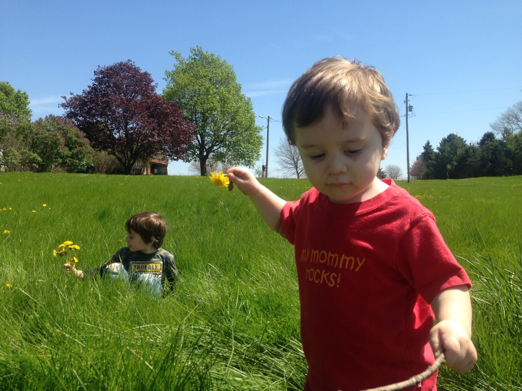 Counting blessings and dandelions on a beautiful day.